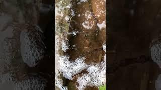 해산물 잡기 2021 ,진흙 속 장어 잡기, 진흙 속 …