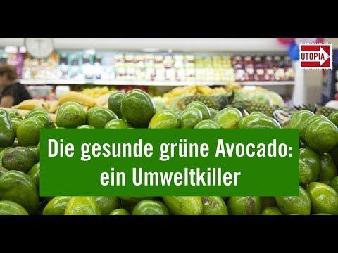 avocadokern züchten