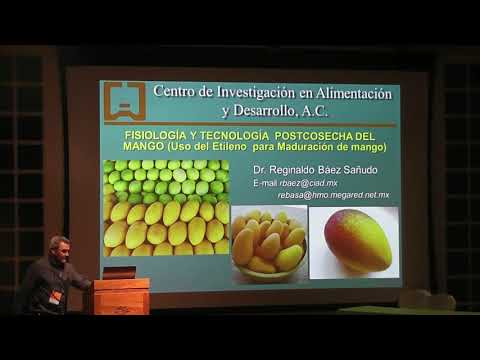 Fisiologia Y Tecnologia Postcosecha Del Mango