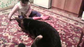 Немецкая овчарка играет с ребёнком. Смотреть всем!!!