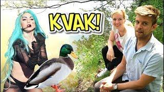 České kachny dělají …COŽE? | Američan hádá zvuky zvířat