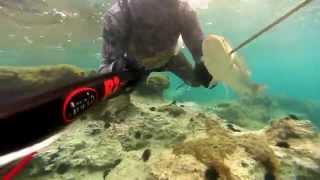 Repeat youtube video shallow water spearfishing 2014-Ψαροντουφεκο στα ρηχα 2014