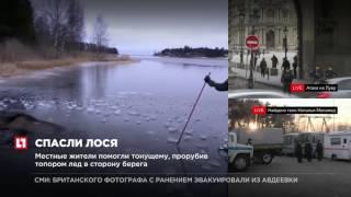 В Сети появилось видео спасения в Швеции провалившегося под лед лося