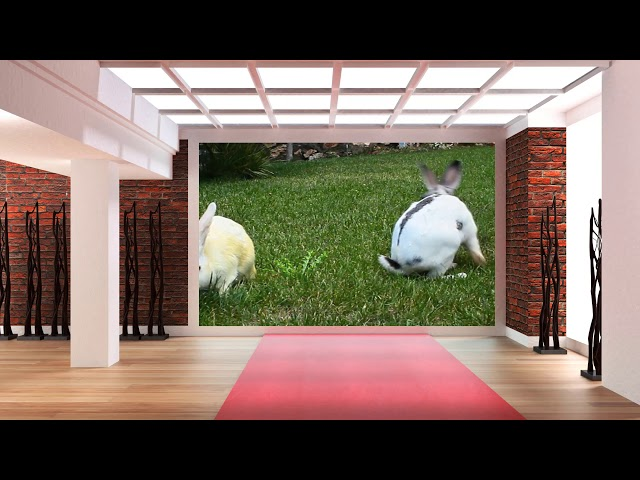 Bunny Rabbit Eating Together on Green Screen 33