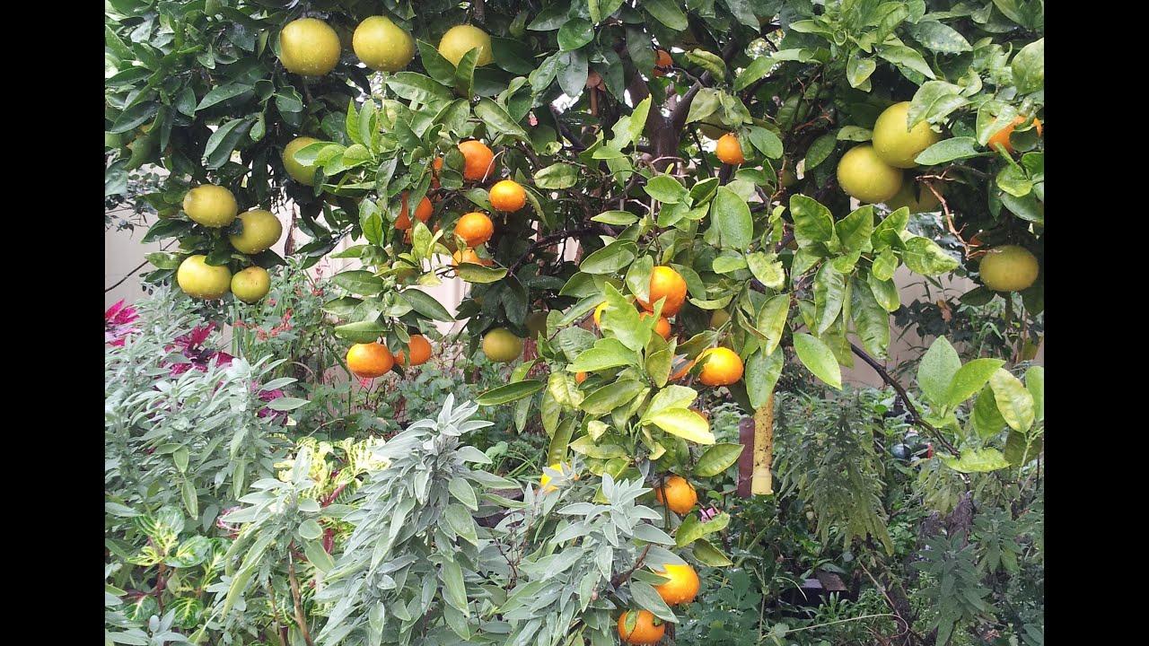 Companion planting in a small productive urban garden ...