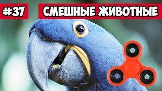 Попугай со спинером - смешные животные | Bazuzu Video ТОП подборка август 2017