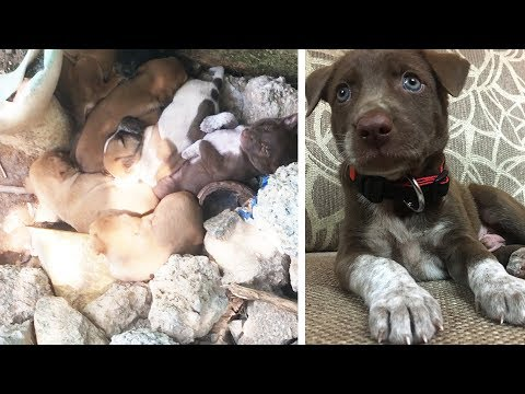 Stray Puppy Rescue and Adoption | Hetty & Percy