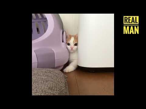 adorable little kitty ✓ Insanely Cute Kitten
