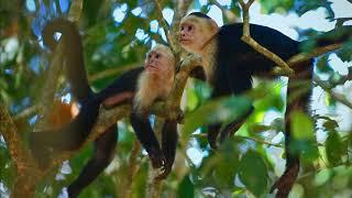 Jardín de los Monos - Matapalo - Costa Rica