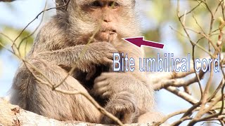 Скачать Stacy Hungry Want To Eat Umbilical Cord She Bite Her Baby 39 S Cord By Carefully