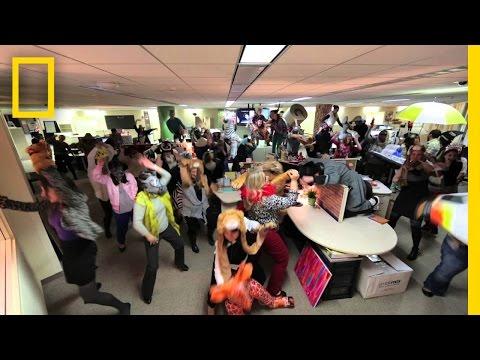 Office Harlem Shake | National Geographic