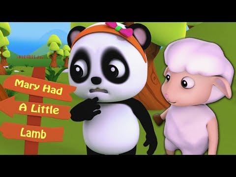 แมรี่มีลูกแกะน้อย | การ์ตูนเด็ก | เพลงเด็ก | Baby Bao Panda | Mary Had A Little Lamb | Kids Rhymes