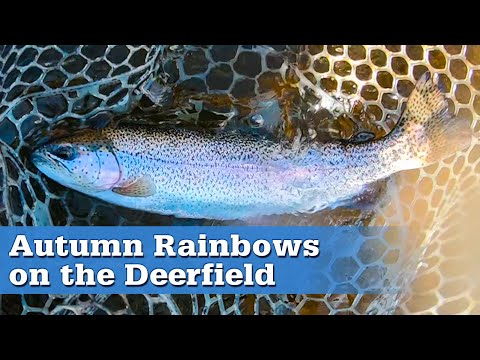 Fly Fishing For Rainbow Trout On The Deerfield River | S17 E06