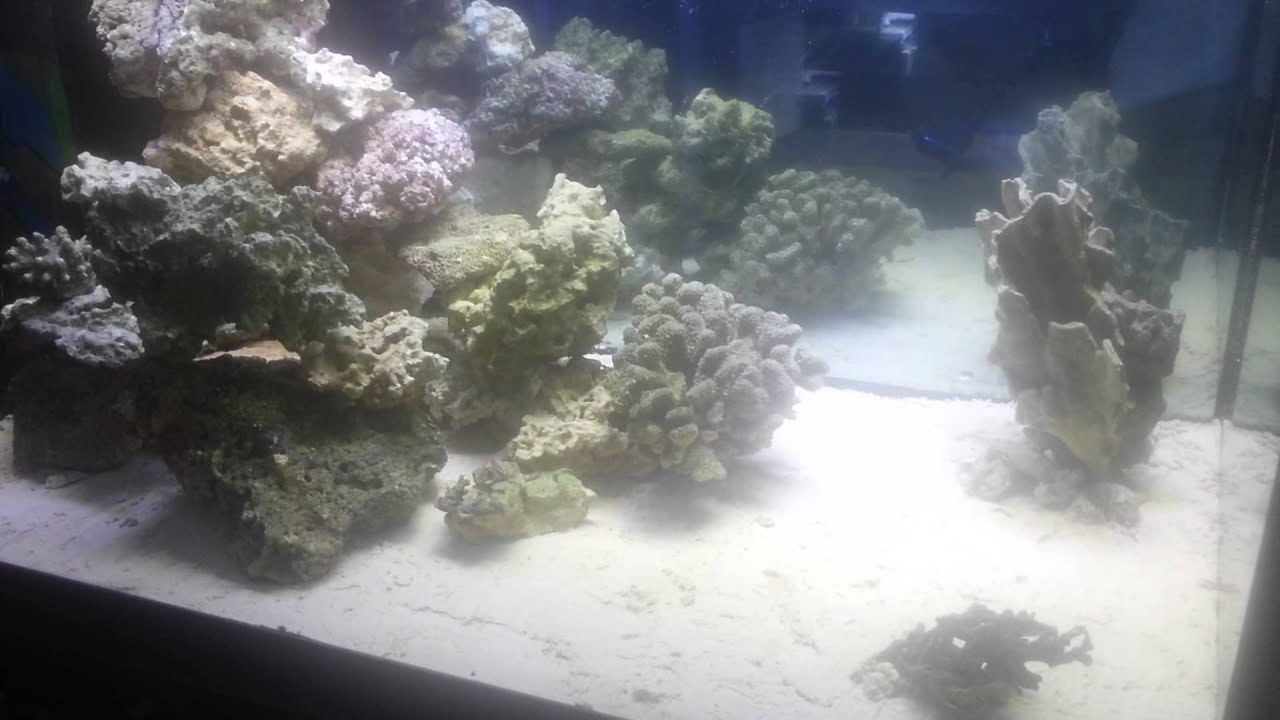 150 gallon tall aquascaping ideas for reef tank - YouTube