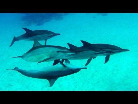 Highlights im Roten Meer