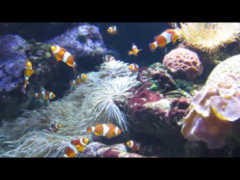 LAX aquarium