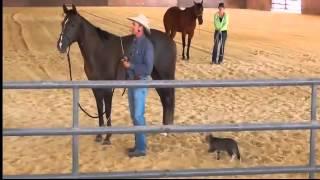 Нападение кота на лошадь