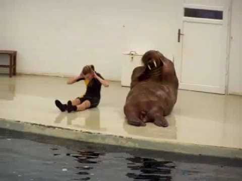 """Personal Training Adelaide showing """"The Walrus work out"""""""