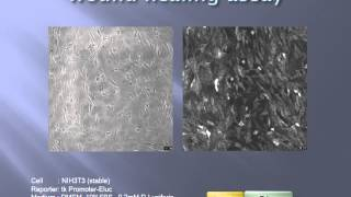 Monitoring of wound healing assay with luminescence in living cell