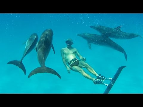 """""""Merman"""" Surprises Dolphins -  Bahamas Part 3 (Ted's HoldOver)"""