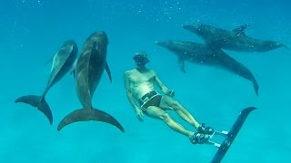 Spearfishing and Dolphins -  Bahamas Part 3 (Ted