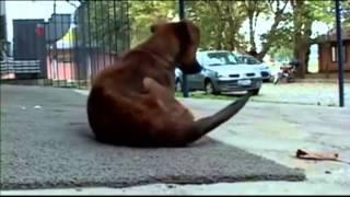 O que acontece quando se abandona um cachorro
