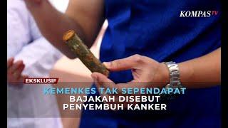 Melihat Bajakah di Hutan Kalimantan - AIMAN.