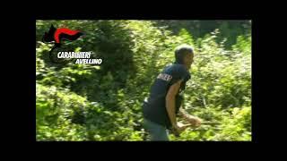 Sequestrate dai carabinieri 2 tonnellate di piante di canapa indiana