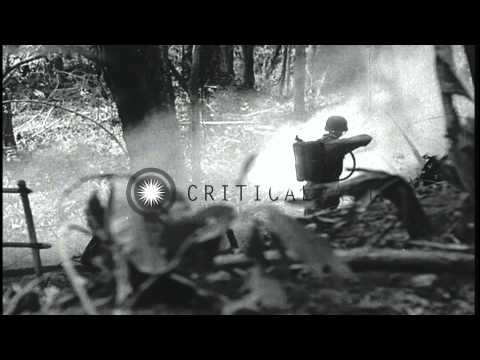 Battle between US Marines and Japanese soldiers in Guadalcanal Island, Pacific Th...HD Stock Footage