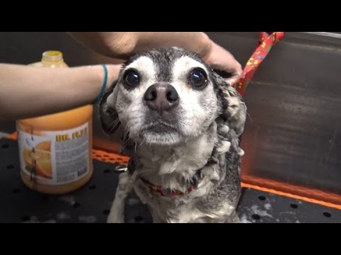 Watch Houdini the dog outsmart humans