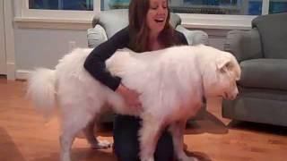 Dog Epilepsy: How to Stop a Dog Seizure
