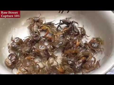 Wisata Kuliner Masak 100 Kepiting Sawah Masakan Vietnam Youtube