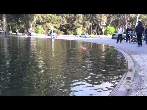 Bruce Lee rows Speckles Lake, Golden Gate Park, San Francisco