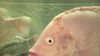 The Secret Language of Supermarket Fish