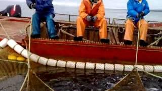 рыбалка артелью