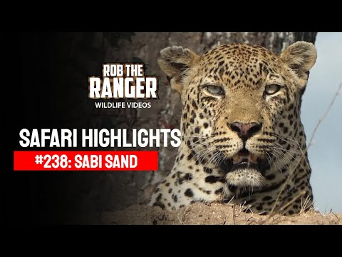 Idube Safari Highlights #238: 13 - 16 November 2013 (Latest Sightings) Travel Video
