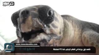 مصر العربية | شاهد اول جراحة فى العالم لتركيب فك 3D لسلحفاة