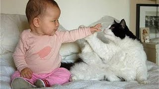 Babies and Cats are Best Friends | Babies and Cats Playing Together