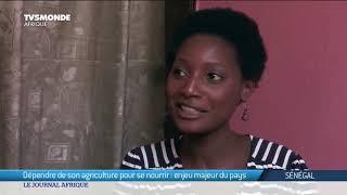 Sénégal : agriculture, l'autosuffisance alimentaire un enjeu majeur - Présidentielle 2019