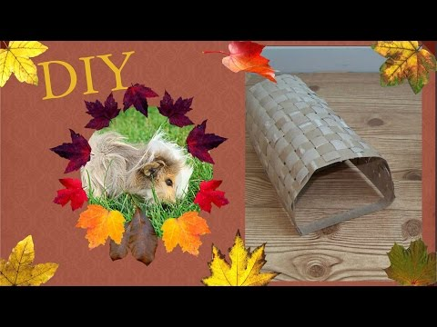 🗞️How To Use Paper Towel Rolls | DIY Guinea Pig Tunnel🖌️