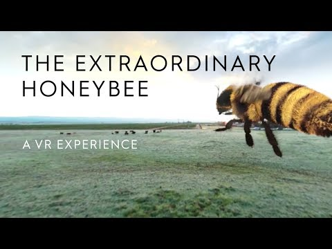 The Extraordinary Honey Bee | A 360 VR Experience | Häagen-Dazs®