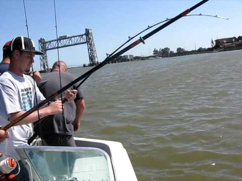 ryan 39 s napa river sturgeon youtube