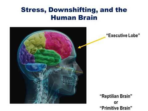 How Stress Affects the Brain It's Implications for Employee Performance