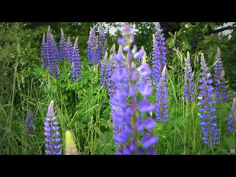 Summer sounds 🐦 Happy birds song 🐦 & beautiful flowers 3 Hours