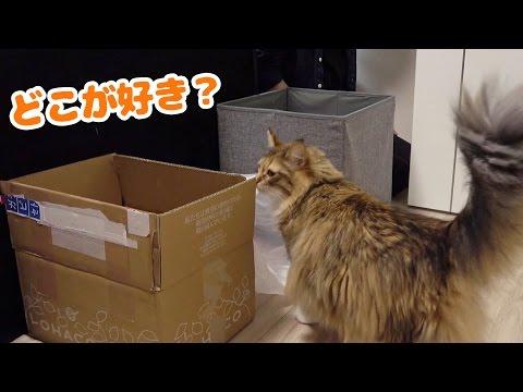 うちの猫は何が一番好きなのか決定戦