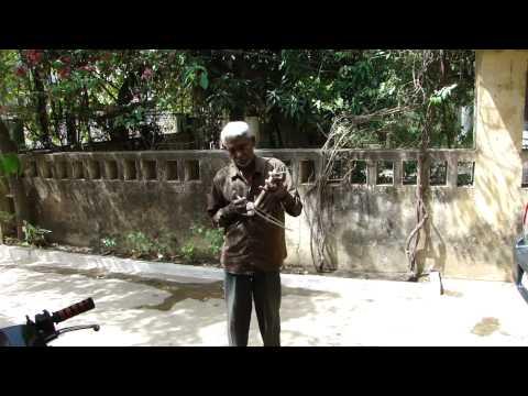 Melodies from Chhattisgarh on Ektara by Shri Dhanpat. Part-1 © Pankaj Oudhia