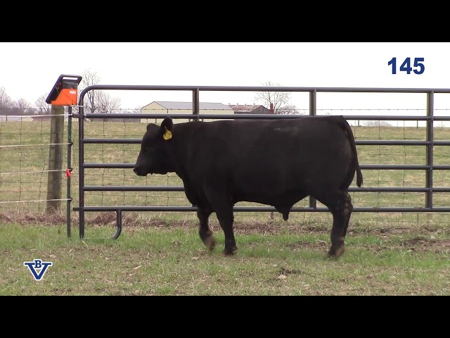 Branch View Angus Lot 145