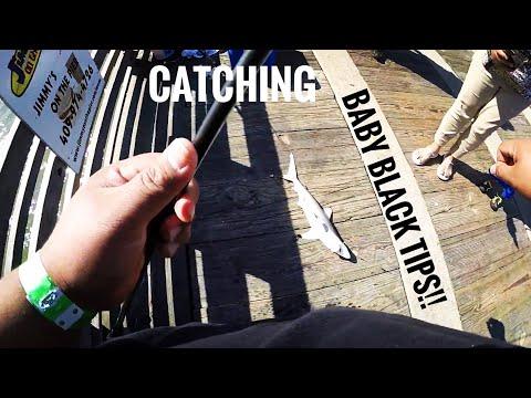 CATCHING BLACK TIP SHARK IN GALVESTON TX (HOW TO CATCH SHARK)