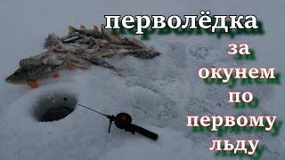 перволёдка  За окунем по первому льду зимняя рыбалка