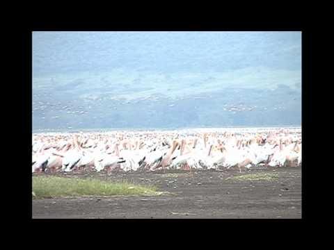 A Spectacle of Birds;  Lake Nakuru, Kenya
